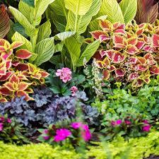 337 best gardening tips images on pinterest gardening tips