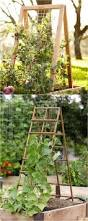 Vine Trellis Ideas 21 Easy Diy Trellis U0026 Vertical Garden Structures Garden