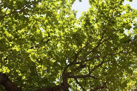 free image of sunny tree canopy