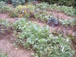 Fall Vegetable Garden Plants by Plant A Fall Garden And Grow Veggies Far Beyond Summer U2014 Veggie