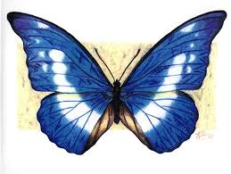 world best butterfly drawing with colours color pic of butterflies