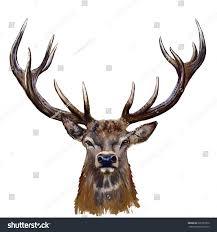 Deer Head by Deer Head Digital Painting Deer Head Stock Illustration 335787956