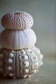 by by best 25 sea shells ideas on shells seashell and