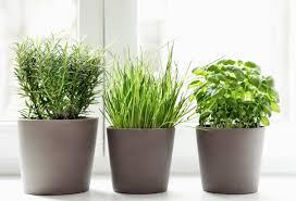 Best Indoor Plants by The Best Indoor Plants For Condo Living Paradigm Midtown