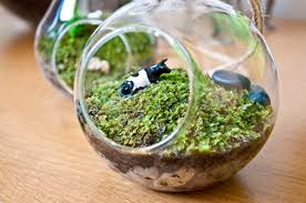 moss and terrarium