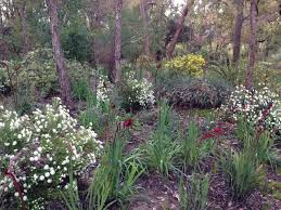 native plant nurseries perth native and exotic styles at kings park perth u2013 janna schreier