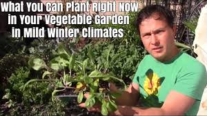 what you can plant right now in your vegetable garden for mild
