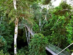 canopy amazon peru machu picchu and the amazon rainforest tour paragon
