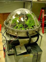 a garden myth is born plants don u0027t purify air