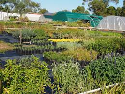 native plants nursery melbourne mornington peninsula youth enterprises nursery melbourne