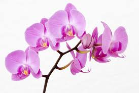 flower orchid how do orchids live growing indoors