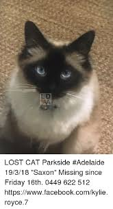 Missing Cat Meme - lost cat parkside adelaide 19318 saxon missing since friday 16th