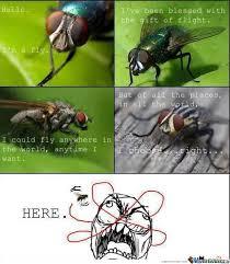 Fly Meme - troll fly by kentzy meme center