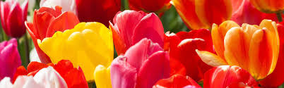 White Flower Farm Coupon Code - wholesale u0026 bulk flower bulbs dutchgrown