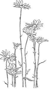 garden of daisy flower coloring page garden of daisy flower