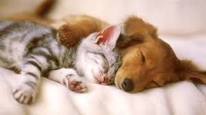wallpaper u0027s collection cute animals wallpapers