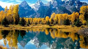 Wyoming forest images Landscapes autumn season forest wyoming grand teton national jpg