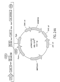 patent us8030066 methods and compositions for synthesis of