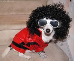 Animal Halloween Costumes Thriller Dog Costume Cute Animals Halloween Diy Costumes Costume