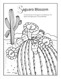saguaro blossom coloring page