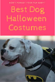 dog halloween costumes roamiliciousbest dog halloween