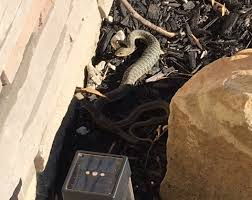 Found A Snake In My Backyard Geauga Park District Ask A Naturalist