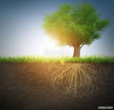 tree with roots stock photo and royalty free images on fotolia