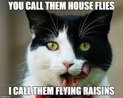 Cute Kitty Memes - luxury 26 cute kitty meme wallpaper site wallpaper site