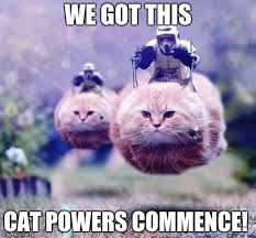 We Got This Meme - storm trooper cats imgflip