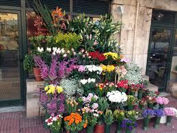 floral shops athens florist shops below parliament