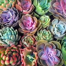 amazon succulents best 25 buy succulents ideas on pinterest agave plant buy