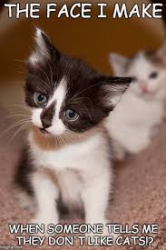 Cute Kittens Meme - life can be pretty hard sometimes but luckily cute kittens are