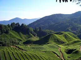 cameron highlands district wikipedia