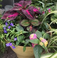 Pictures Of Garden Flowers by Garden Center Tom U0027s Farm Market