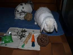 make your own homemade rabbit toys pethelpful