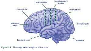 Which Part Of The Brain Consists Of Two Hemispheres 6 Major Parts Of The Brain And How They Work How The Brain