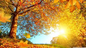 beautiful autumn landscape 4k hd desktop wallpaper for 4k ultra