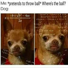 Annoyed Dog Meme - these memes will make any dog owner feel more related than ever