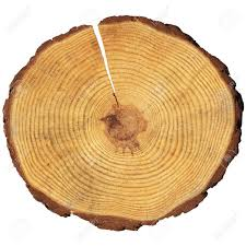 wooden circle with a split cut of the log stock photo picture and