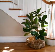 artificial plants for decorating simplymaggie com