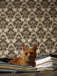 How Do You Get The Urine Smell Out Of Carpet Best 25 Cat Urine Smells Ideas On Pinterest Urine Smells Cat