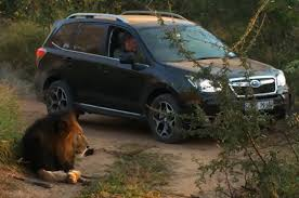 subaru forester xt off road feature flick 2014 subaru forester goes on safari for epic drives