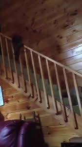 Sliding Down A Banister Cockatoo Slides Down Stair Railing Jukin Media