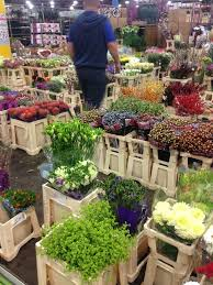 covent garden flower market u2014 cultivated