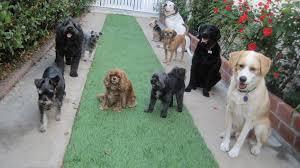 house dogs a full dog house stella u0026 waffles