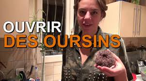 comment cuisiner des oursins technique de cuisine ouvrir un oursin
