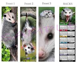 opossums possums collection on ebay