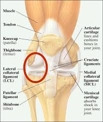 Lateral Patellar Ligament Lateral Collateral Knee Ligament Injury Symptoms And Treatment