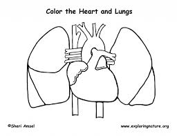 the most stylish human heart coloring page intended to inspire in