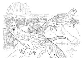 desert lizard coloring page sahara desert coloring pages page image clipart images grig3 org